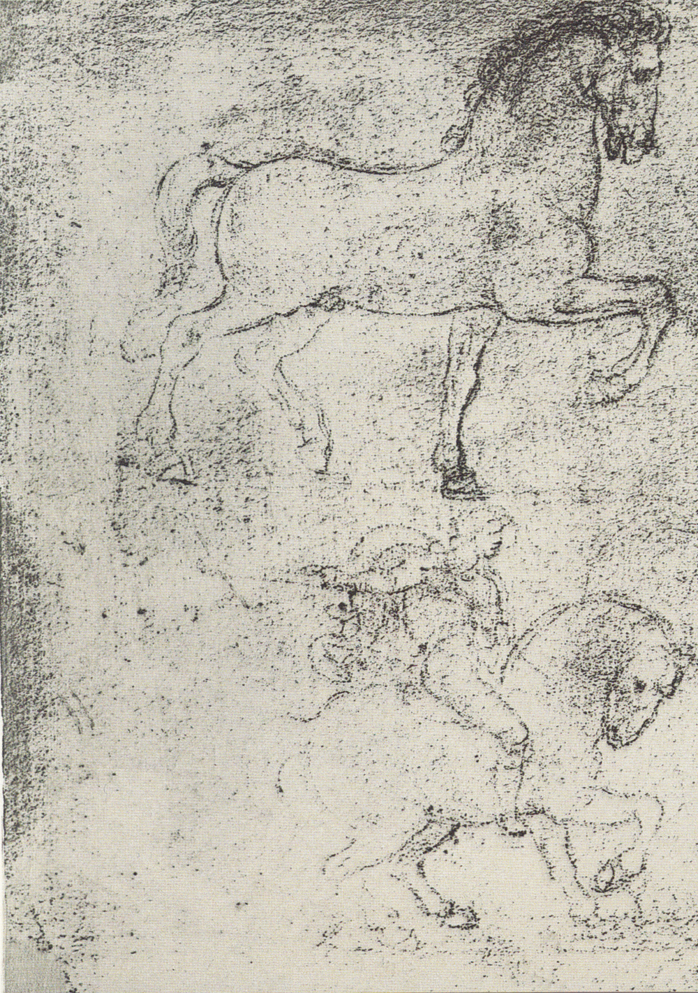Leonardo da Vinci - Drawings - Animals - Horses - 01.jpg
