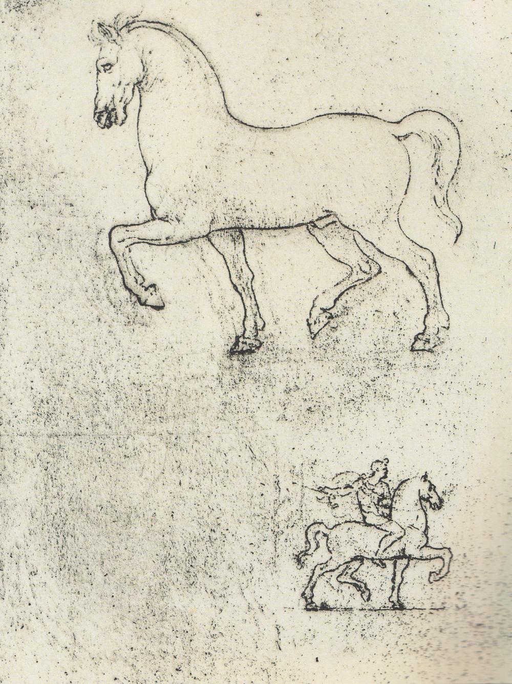 Animals — Discovering da Vinci