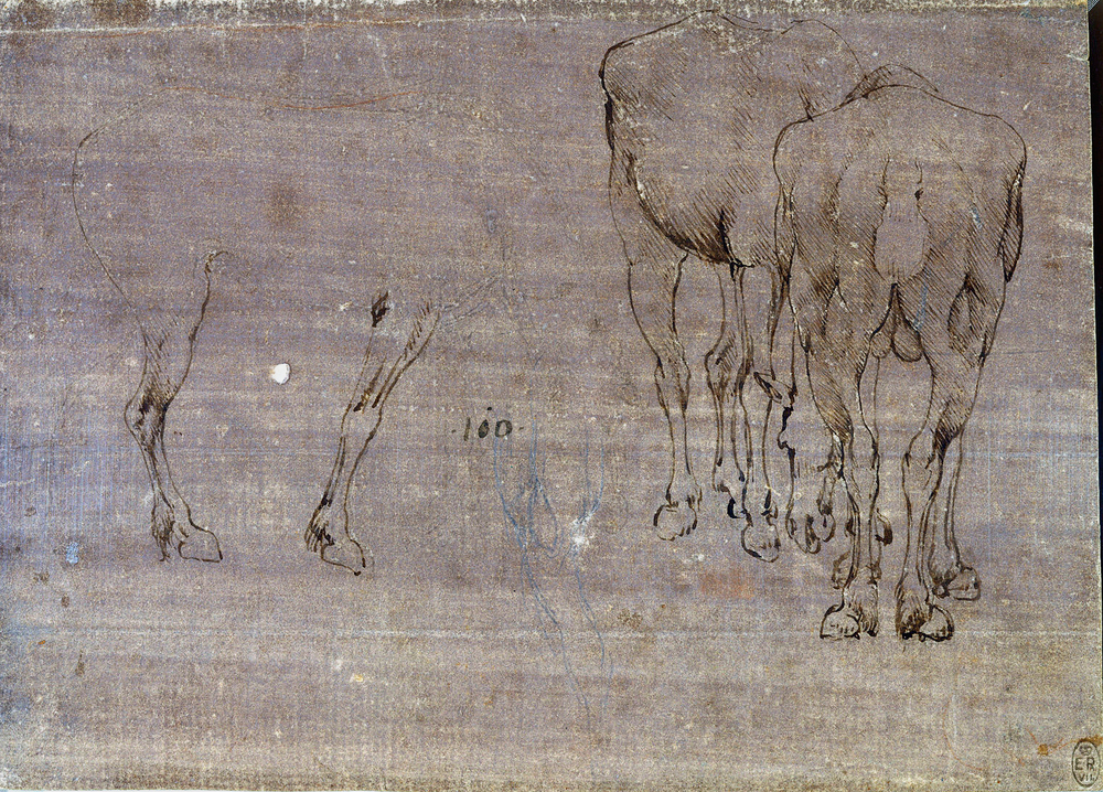 Leonardo-da-Vinci---Drawings---Animals---Bull-Behind.jpg