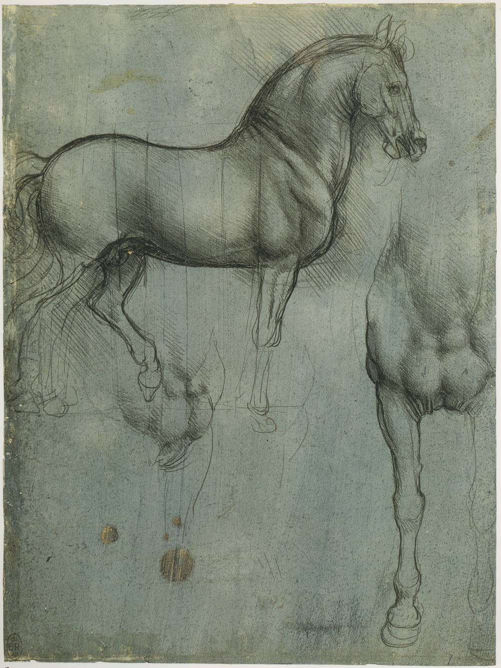 Leonardo-da-Vinci---Drawings---Animals--Horse Studies 1493.jpg