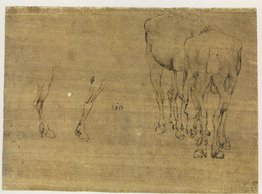 Leonardo-da-Vinci---Drawings---Animals--Horse studies and study of a mule 1478.jpg