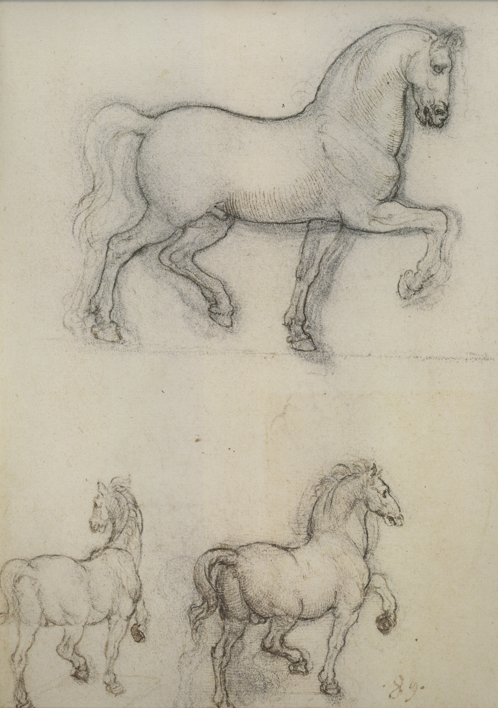 Leonardo-da-Vinci---Drawings---Animals--Horses 2.jpg