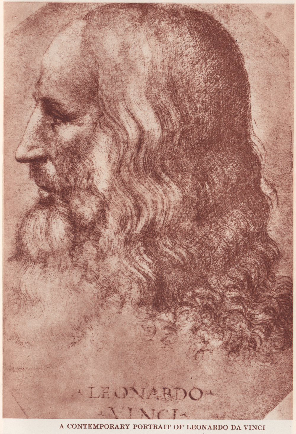 davinci-contempt-portrait--romance.jpg