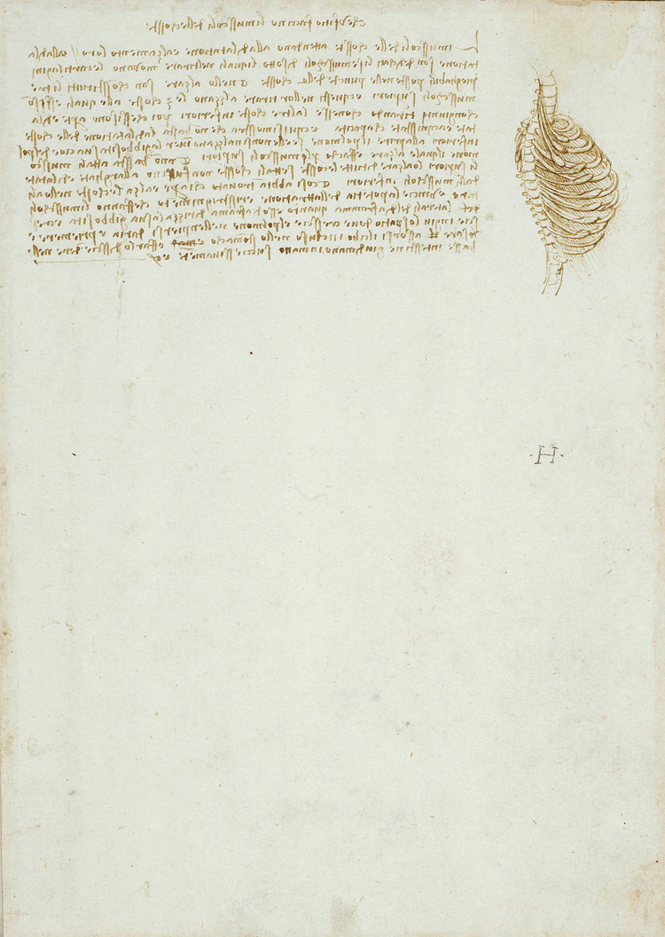 resume Leonardo Da Vinci Resume anatomy discovering da vinci vinci