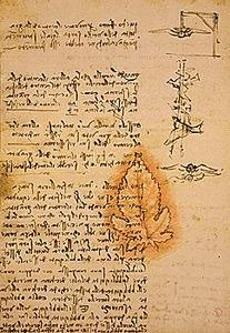 davinci-codex-flightofbirds-11-leafandgravity.jpg