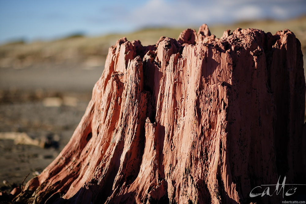 Red Stump, Waikanae 2006