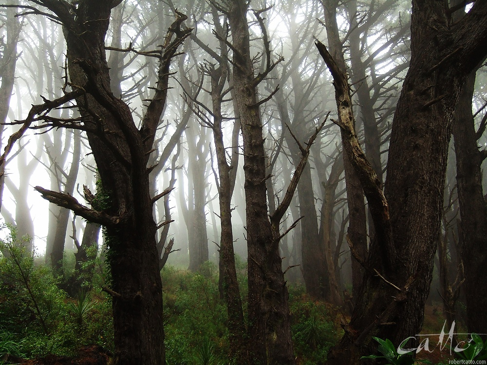 Mt Victoria Forest, Wellington 2005