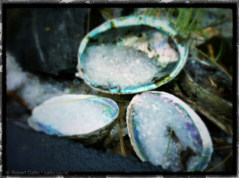 Ah, Wellington. The paua shells are filling with icy hail…