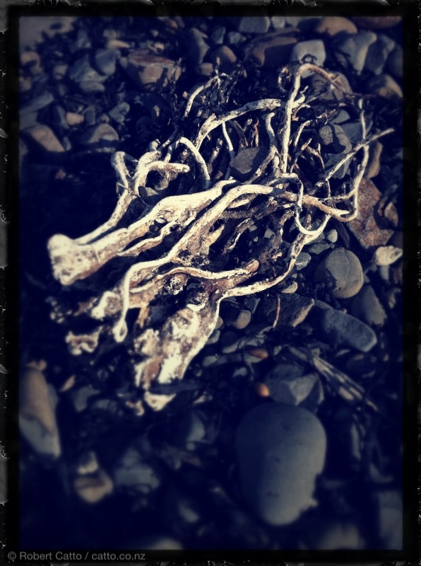 Tangled in Breaker Bay, Wellington.