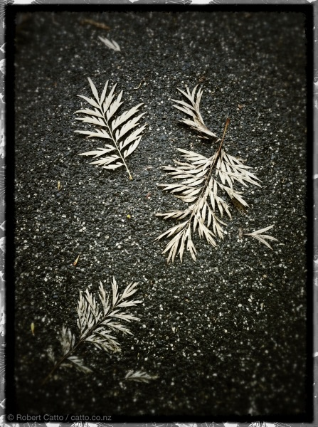 Moulting leaves, at Carlton Gardens in Melbourne.
