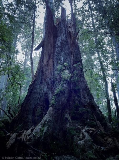 Tasmanian forest, near Hobart.