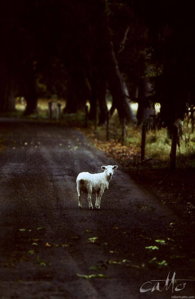 Methven, New Zealand 2003