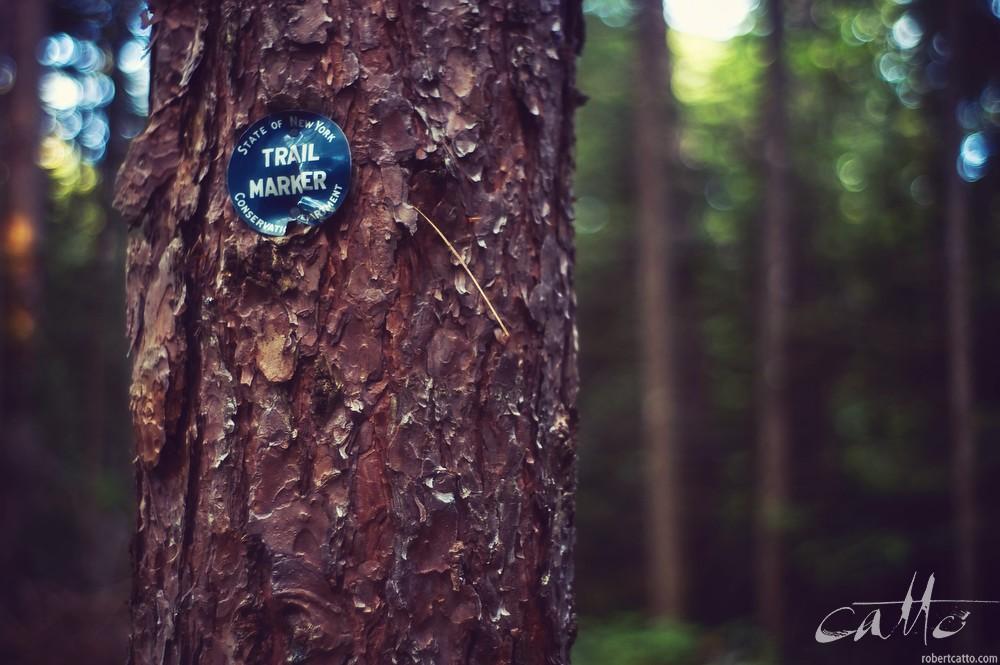 Trail marker, Adirondack State Park, New York