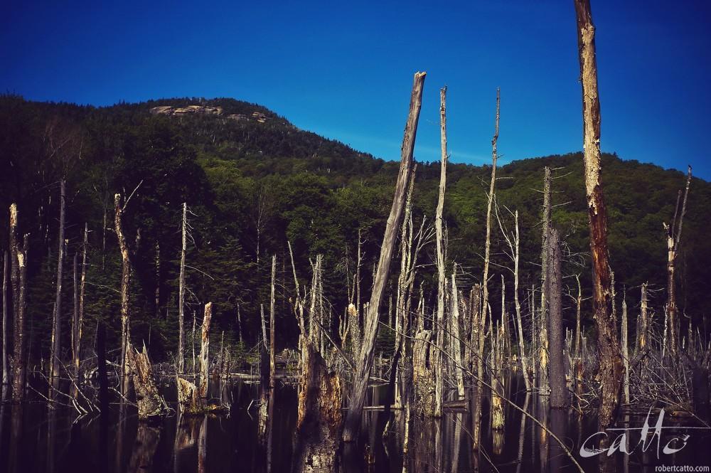 Beaver dam, Adirondack State Park, New York
