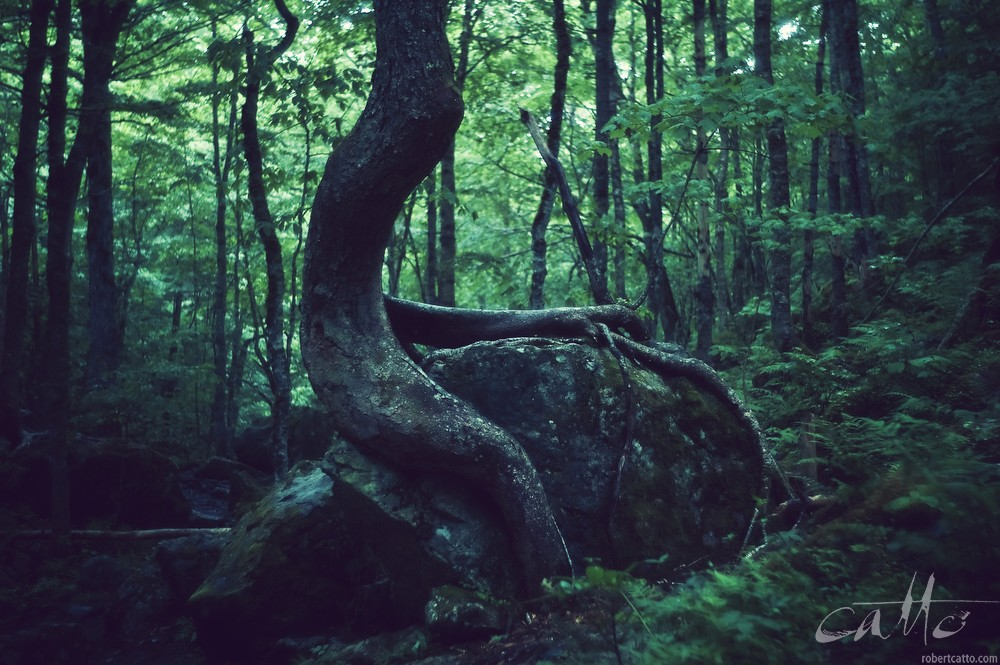 Forest, Nova Scotia