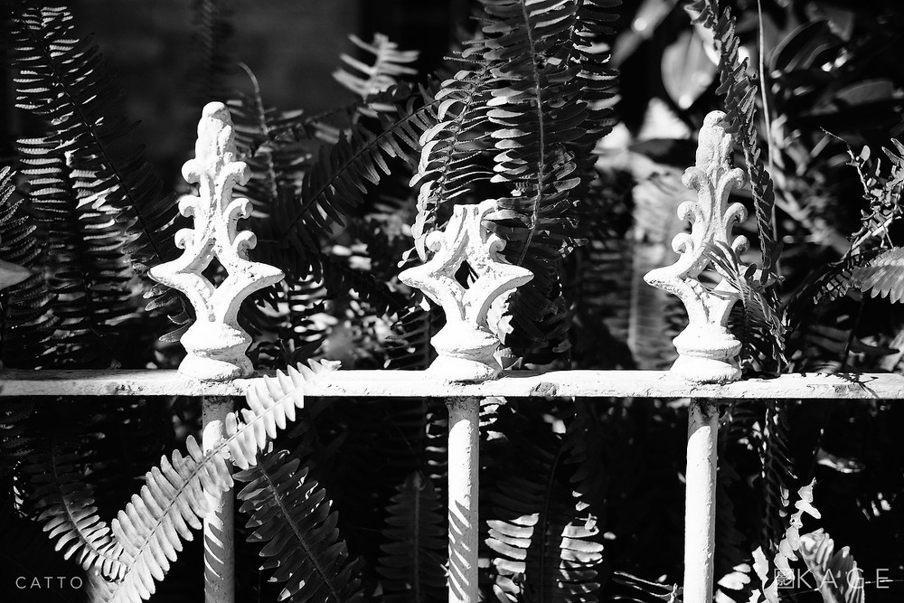 Fence & ferns, Surry Hills