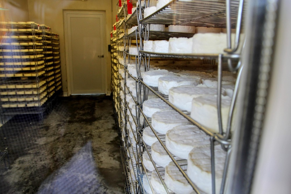 rack-of-camembert-fromagerie-durand.jpg