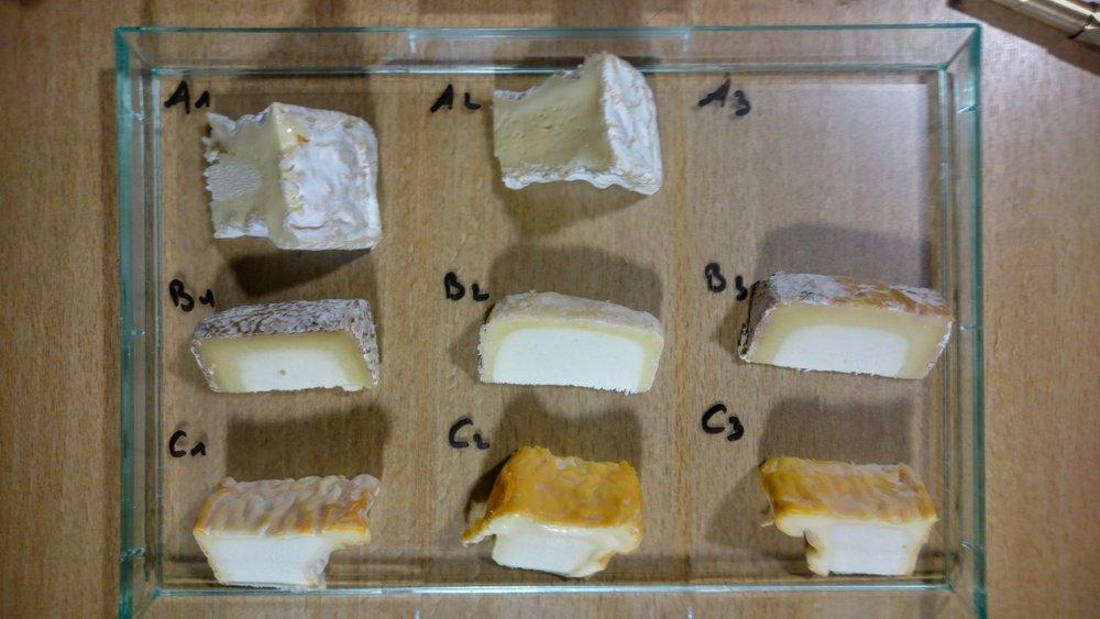 Row A : Camembert || Pos 1 : 4 weeks || Pos 2 : 5 weeks Row B : Petit Blaja (sheep cheese) || Pos 1 : 14 weeks (so old it tasted soapy!) || Pos 2 : 6 weeks || Pos 3 : 8 weeks Row C : Langres || Pos 1 : 3 weeks || Pos 2 : 6 weeks || Pos 3 : 4-5 weeks
