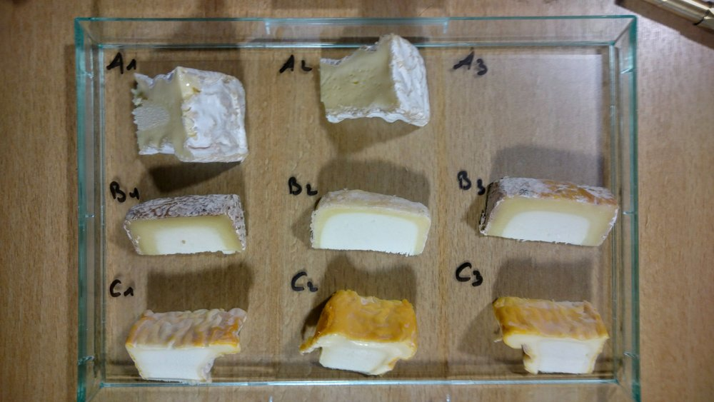 "These are ""flights"" of cheeses. Each row is the same cheese, just aged for different lengths of time. Row A is Camembert de Normandie. Row B is a goat's cheese from the Midi-Pyrenees region (Petit Blaja, aged by Mons). Row C is Langres, a washed-rind cheese from the Champagne region. Can you distinguish which cheese in each row is the youngest/oldest?"