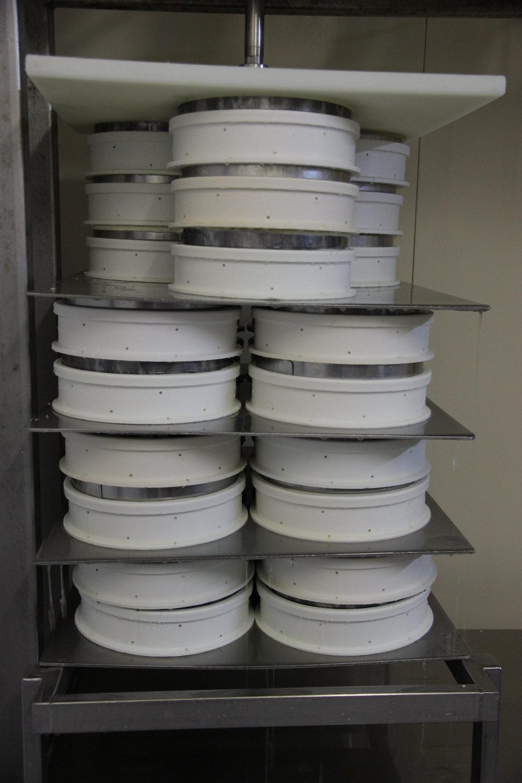Pour ce lot de lait, la fermière aura 33 St Nectaires AOP.
