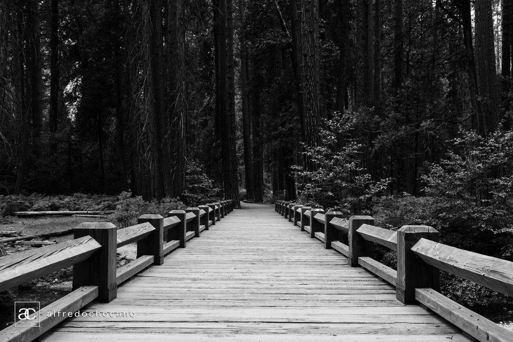 20160821_Yosemite_San_Francisco_51.jpg