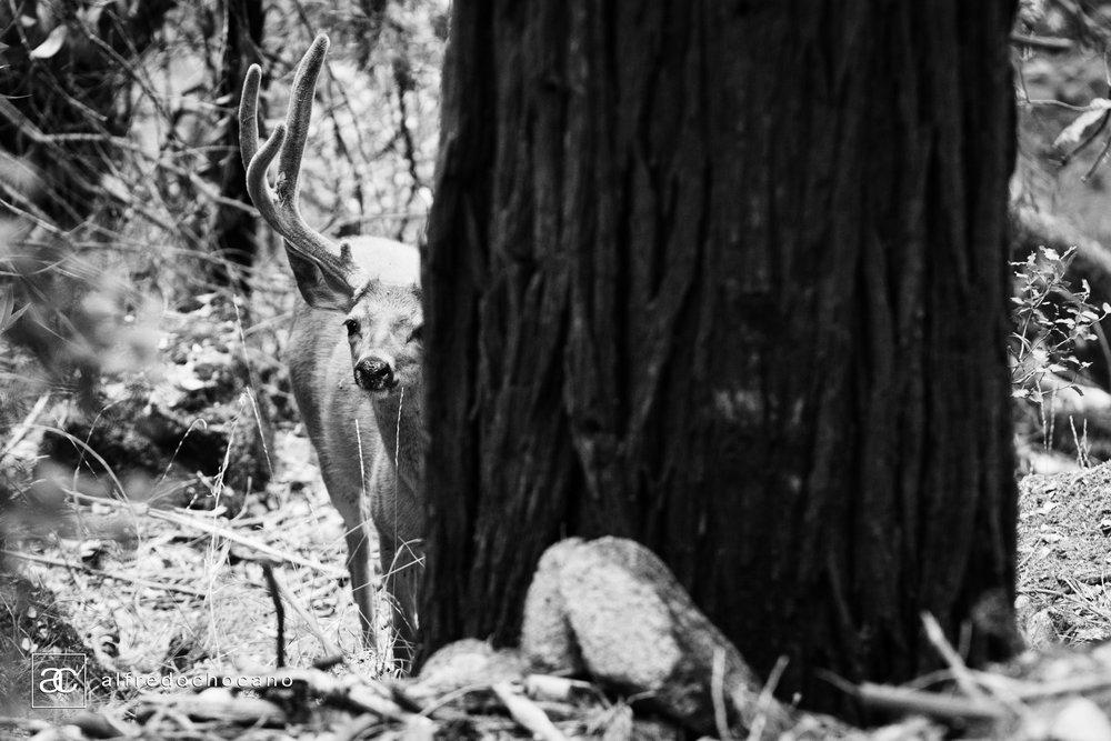 20160821_Yosemite_San_Francisco_90.jpg