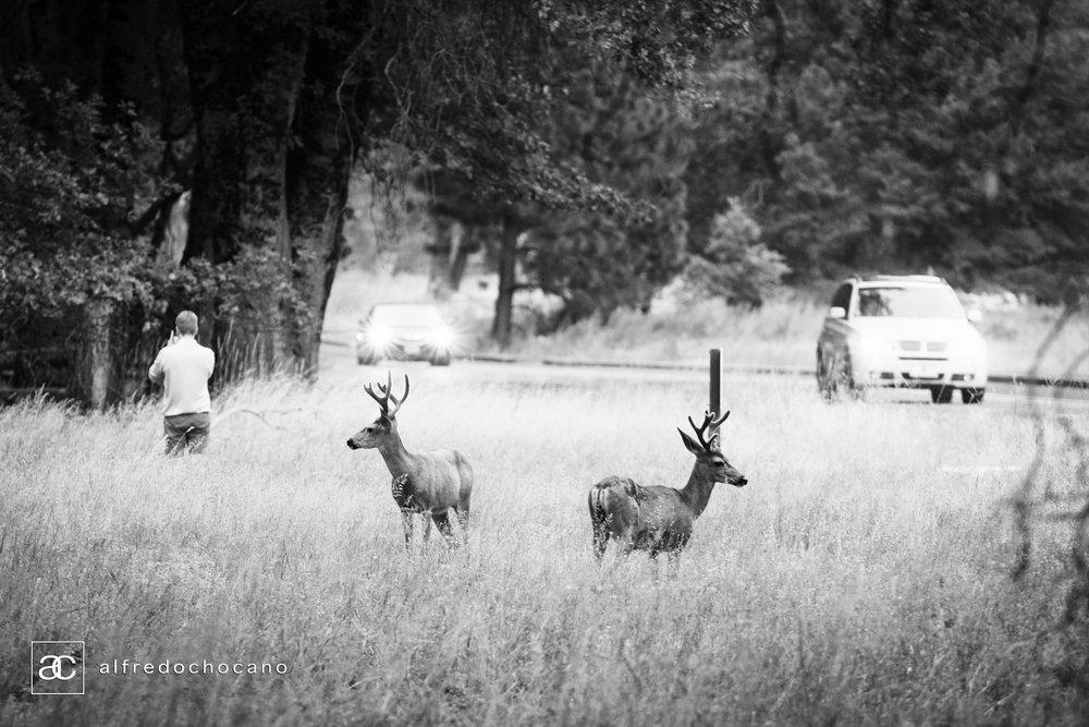 20160821_Yosemite_San_Francisco_101.jpg