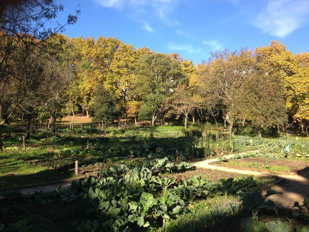 As novas hortas urbanas (de onde vêm muitas das ervas que usamos n' A Luz Ideal).