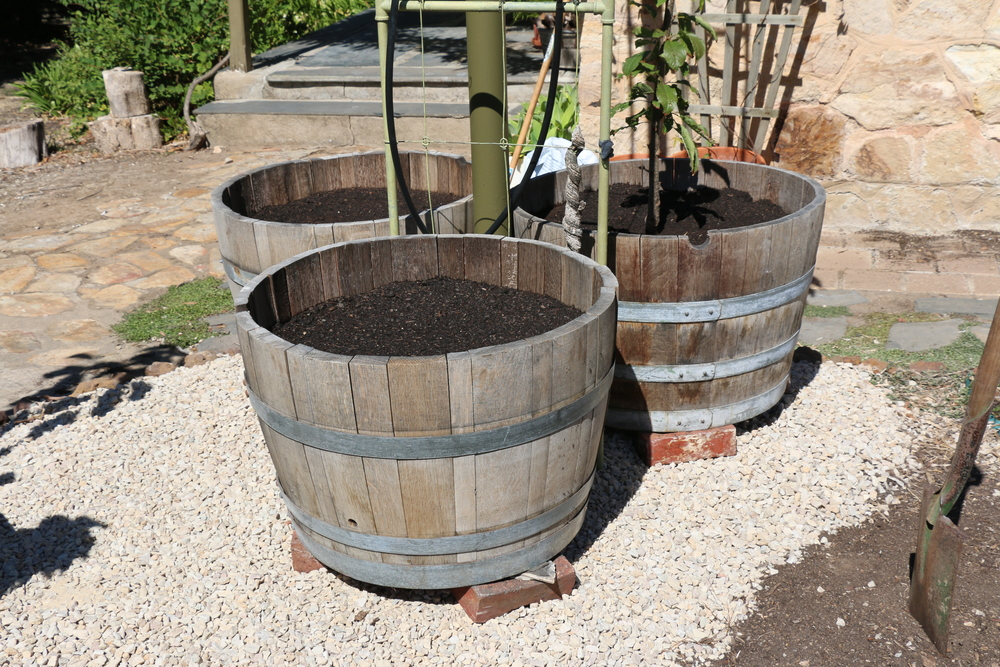 Fresh Wine Barrels