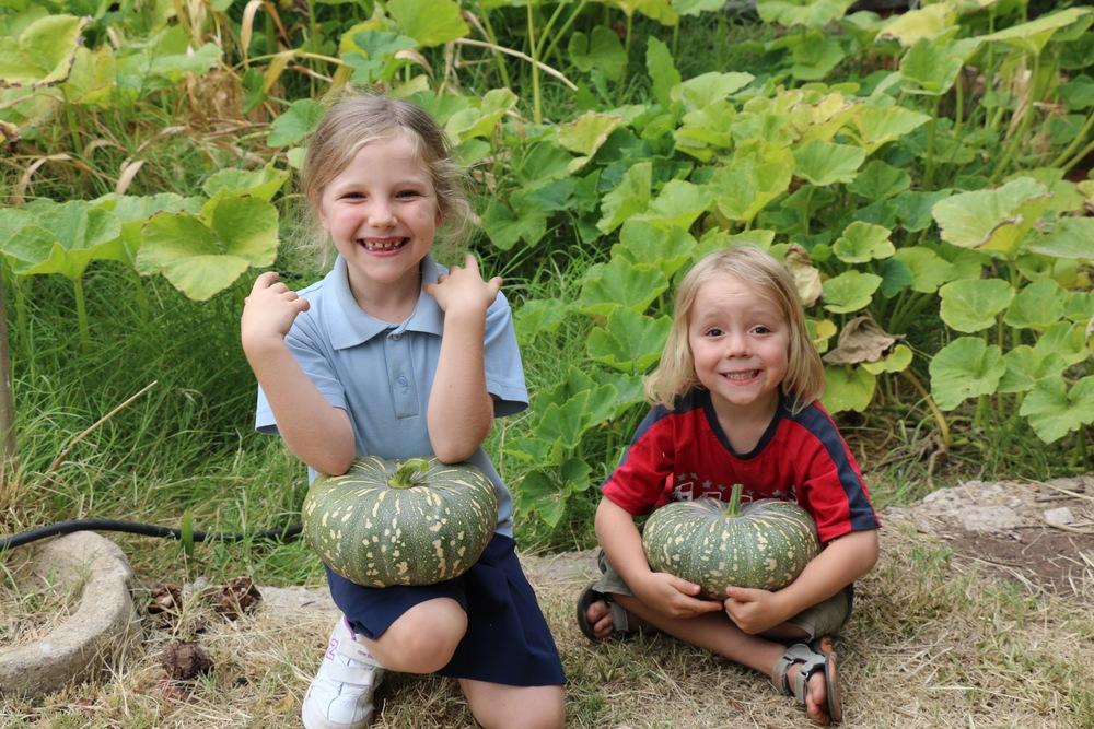 First Pumpkin Harvest.jpg