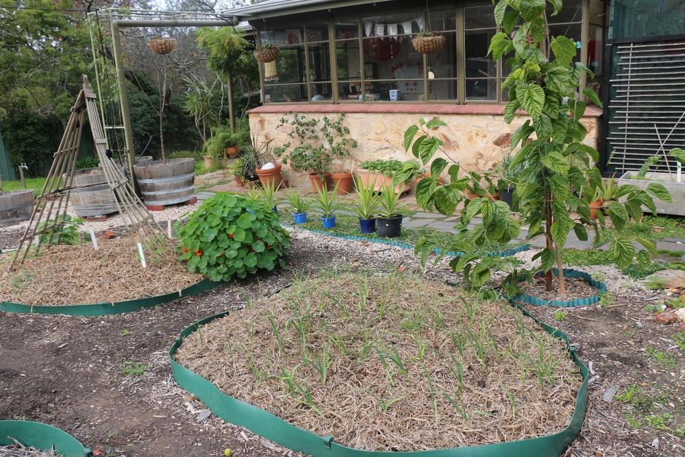 Winter Plantings With Garlic 2015.jpg