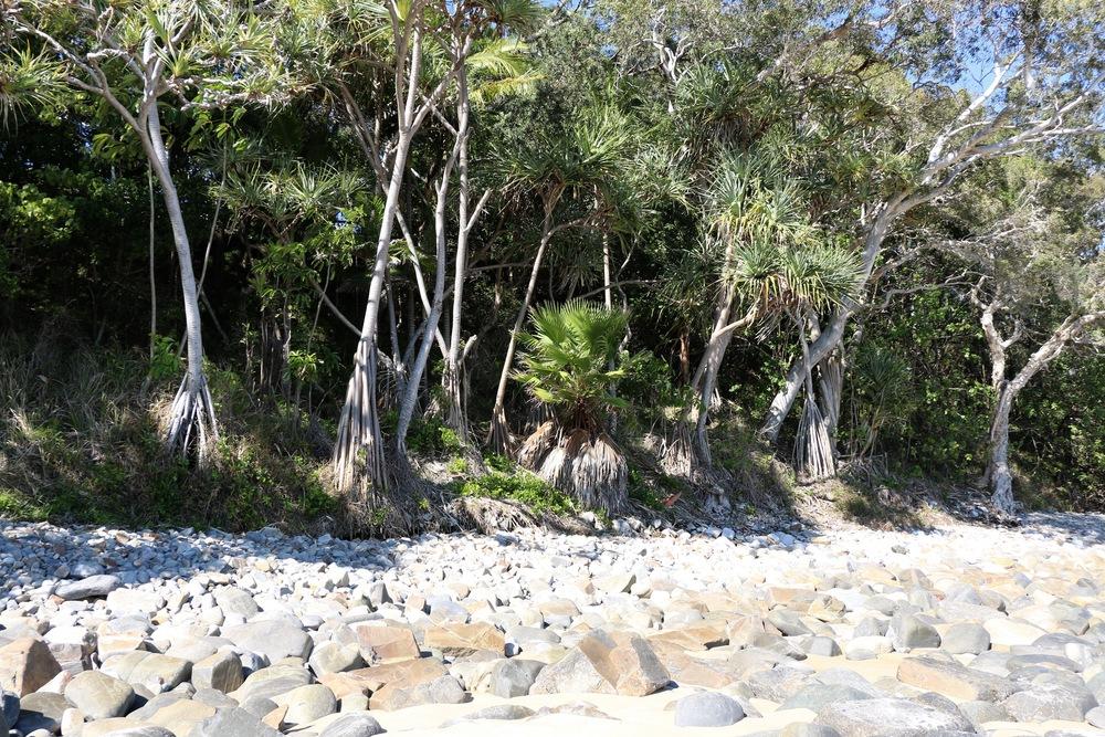 Cove Trees.jpg