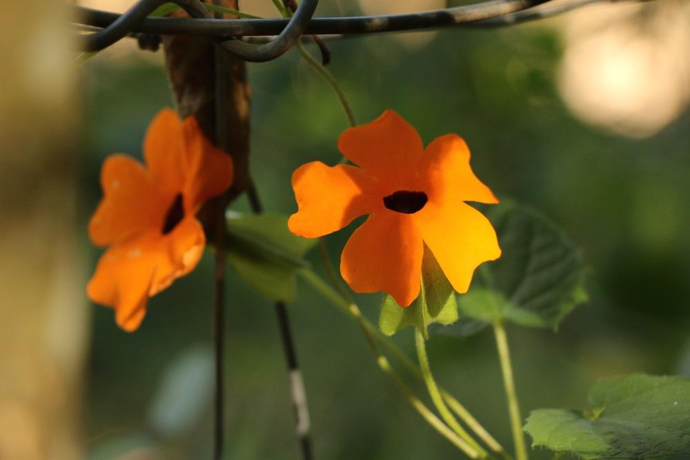 Climbing Flowers.jpg