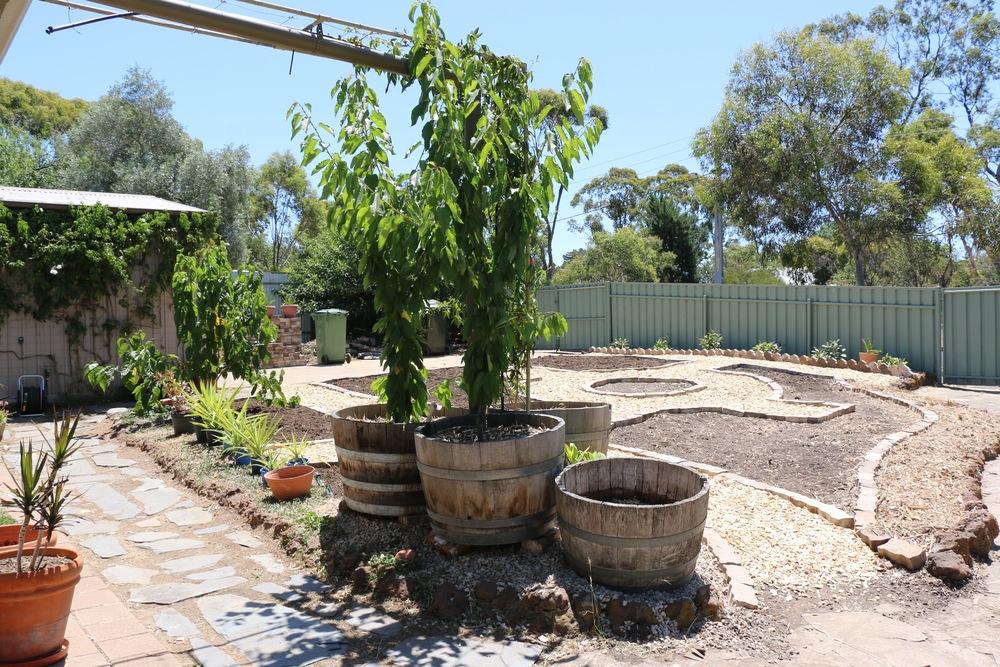 Vegie Garden.jpg