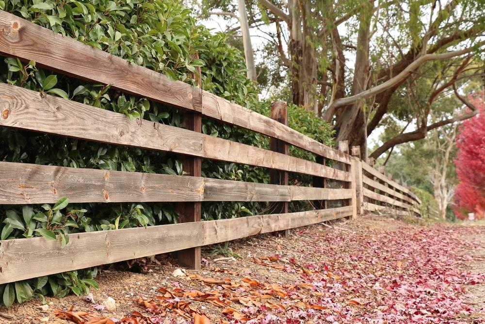 Leafy Path.jpg