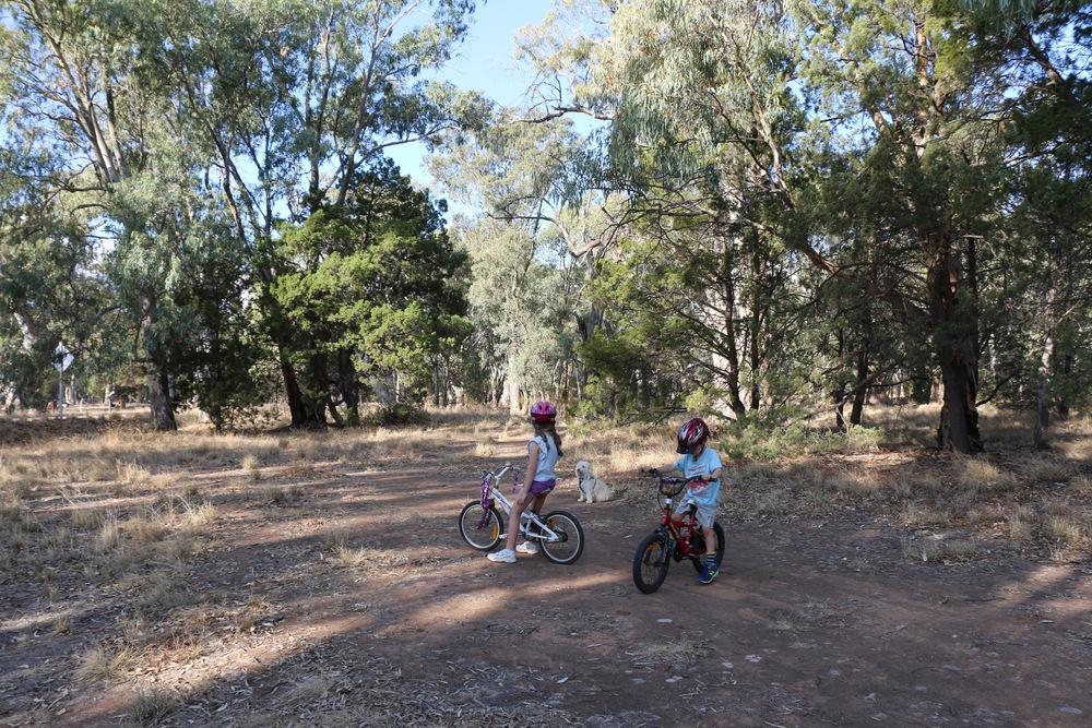 Bikes in the Bush.jpg