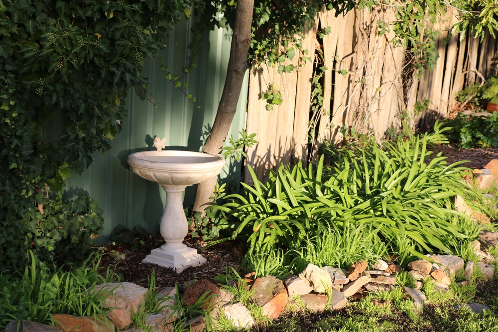 Do you like our new birdbath? I just unloaded it from the car a few minutes before this photo so it hadn't yet had the chance to settle in, much less fill with water. It's a belated 40th birthday gift from my Mum. I have wanted one for so long and I absolutely LOVE it!!!