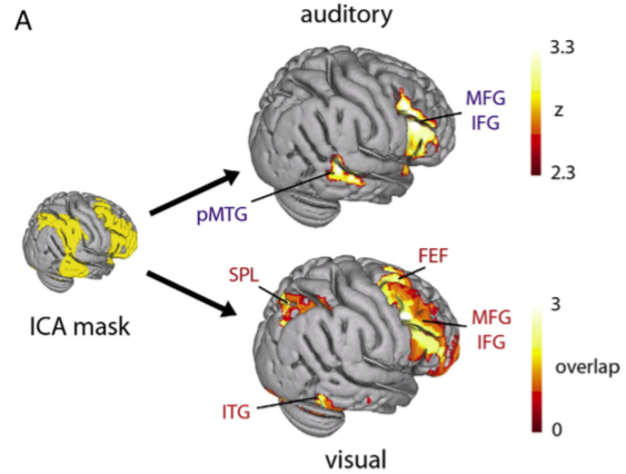 Separable networks observed during top-down attention to auditory and visual modalities. Adapted from Braga et al., 2013, Neuroimage.