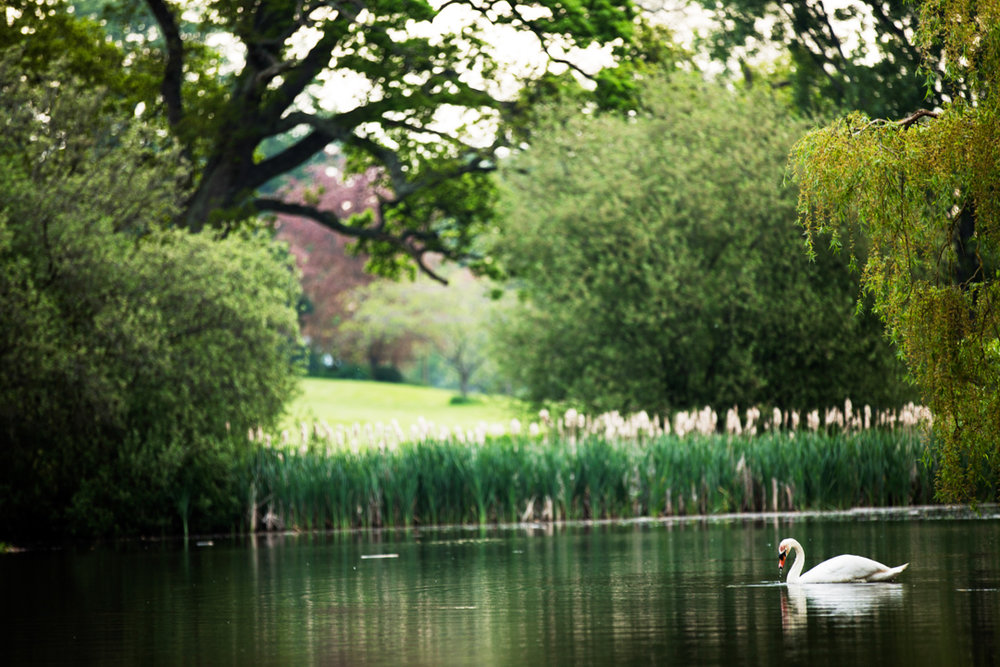 powderham castle swan