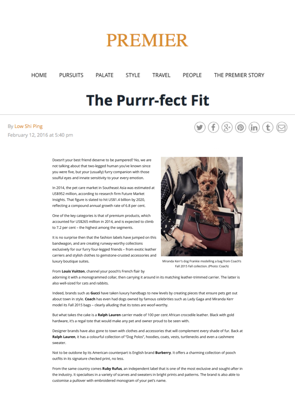 The Purrr-fect Fit - Premier-page-001.png