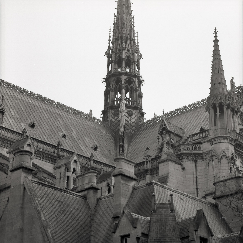 The roof of the Cathédrale Notre-Dame de Paris.