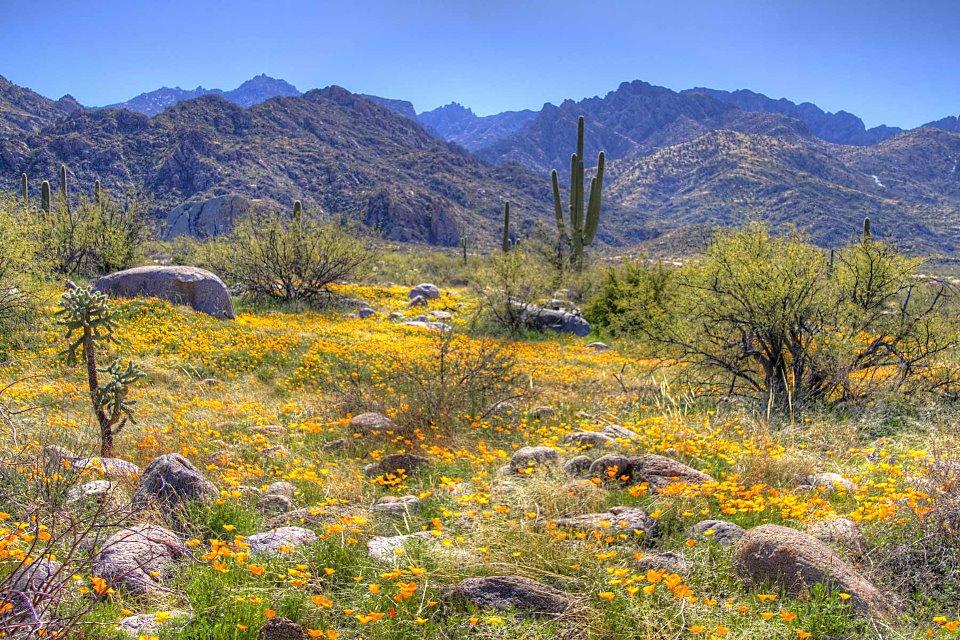 Desert-Spring-Tucson-AZ.jpg