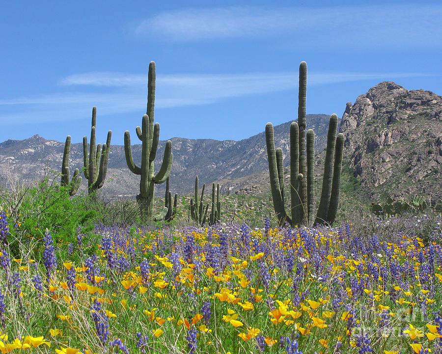 spring-flowers-in-the-desert-elvira-butler.jpg