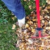 raking-2756006_640.jpg