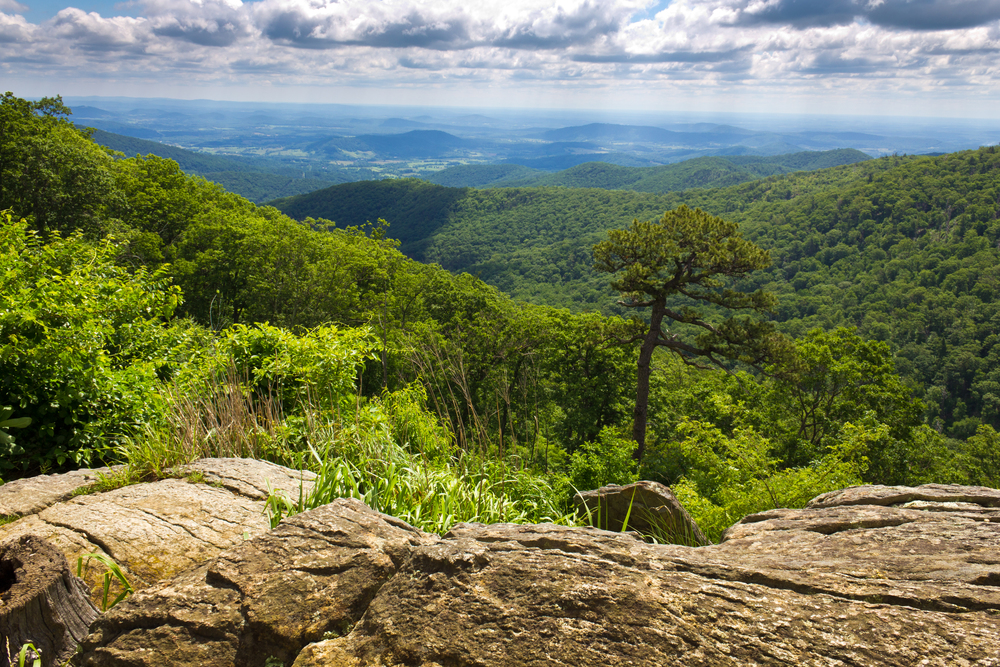 Shenandoah Backcountry © Everett Houser