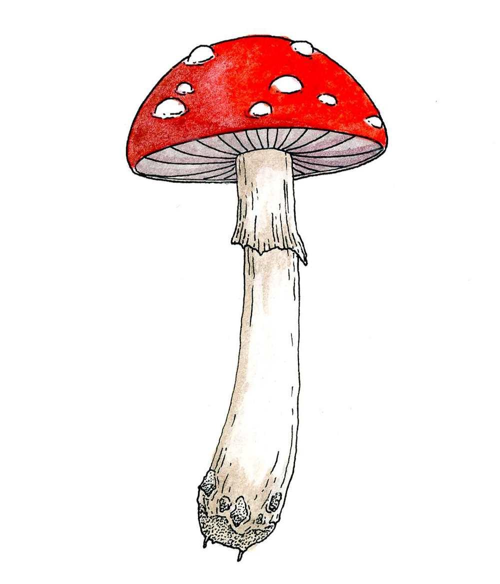 fungi+copy.jpg