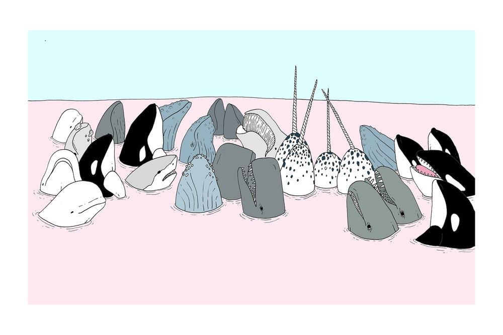 whales copy.jpg