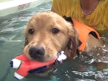 Duke Golden Bond Swimming June 2010.jpg