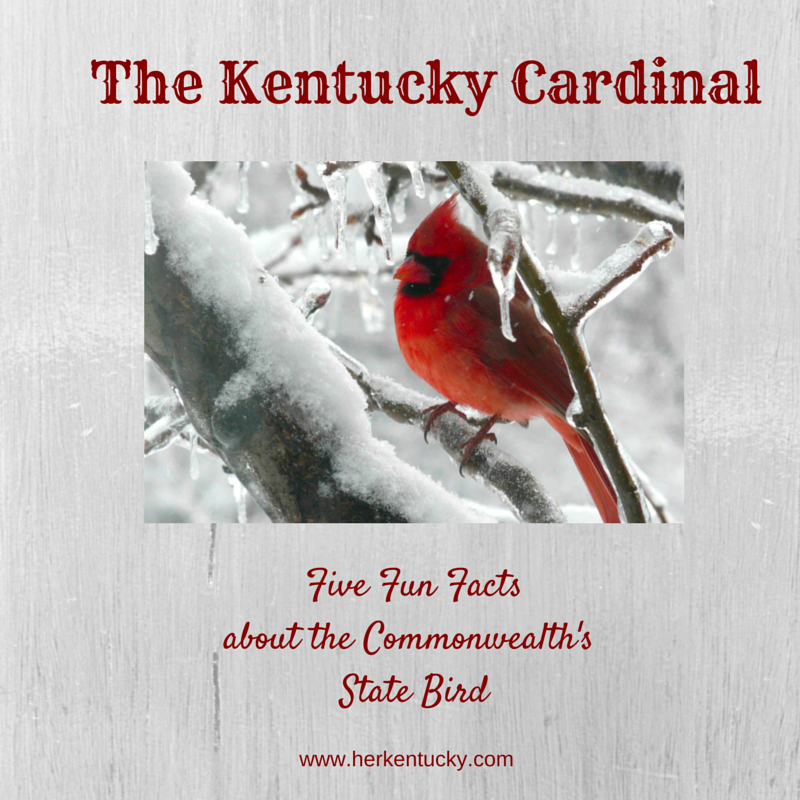 The Kentucky Cardinal | Kentucky State Bird | HerKentucky.com