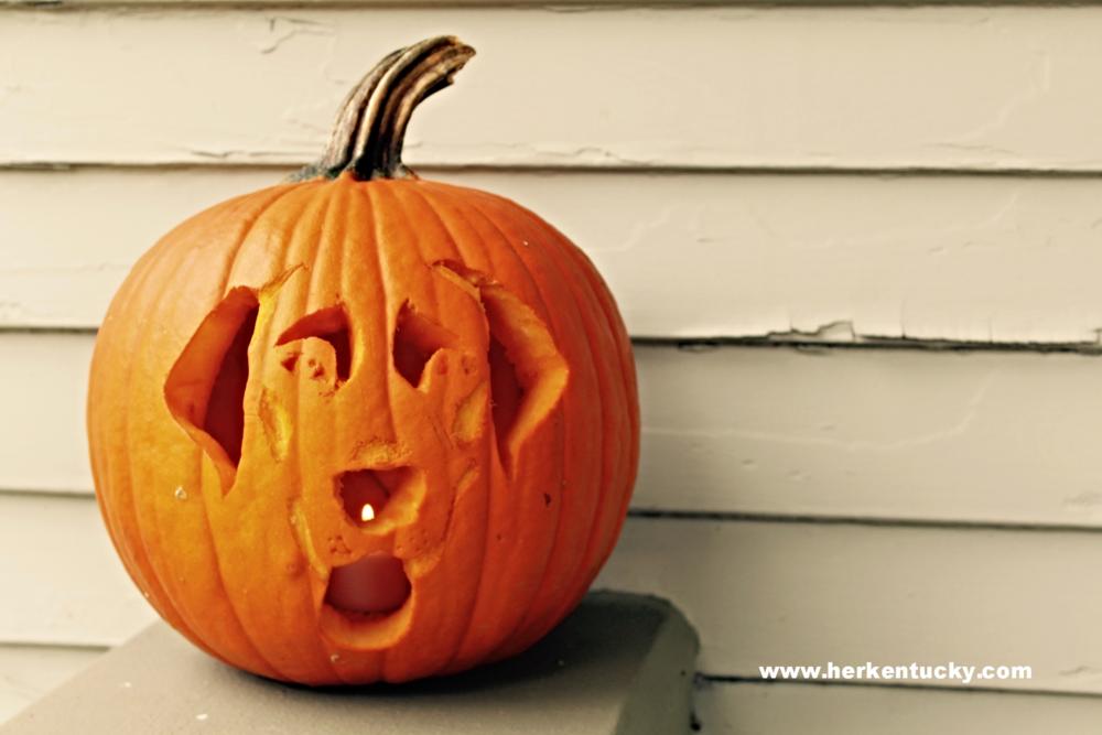 Labrador Retriever Pumpkin | HerKentucky.com